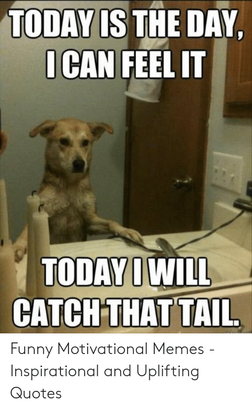 Uplifting Quotes: TODAY IS THE DAY  I CAN FEEL IT  CATCHTHAT TAIL Funny Motivational Memes - Inspirational and Uplifting Quotes