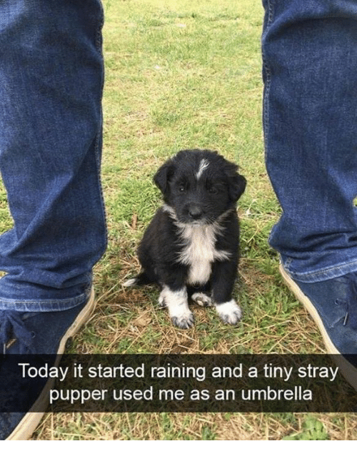Dank, Today, and 🤖: Today it started raining and a tiny stray  pupper used me as an umbrella