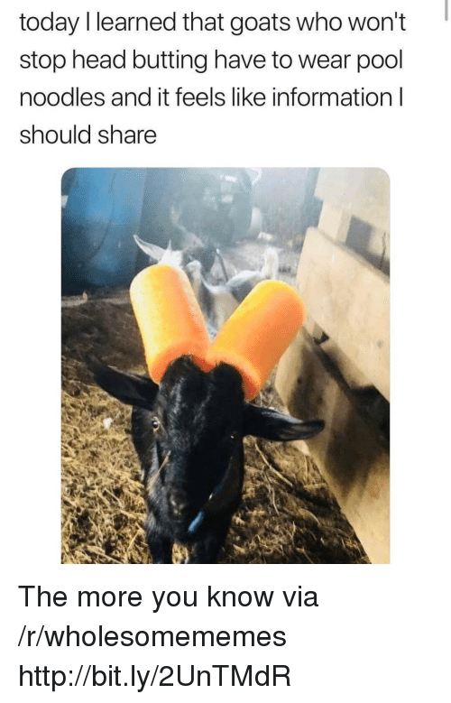 the more you know: today l learned that goats who won't  stop head butting have to wear pool  noodles and it feels like information l  should share The more you know via /r/wholesomememes http://bit.ly/2UnTMdR