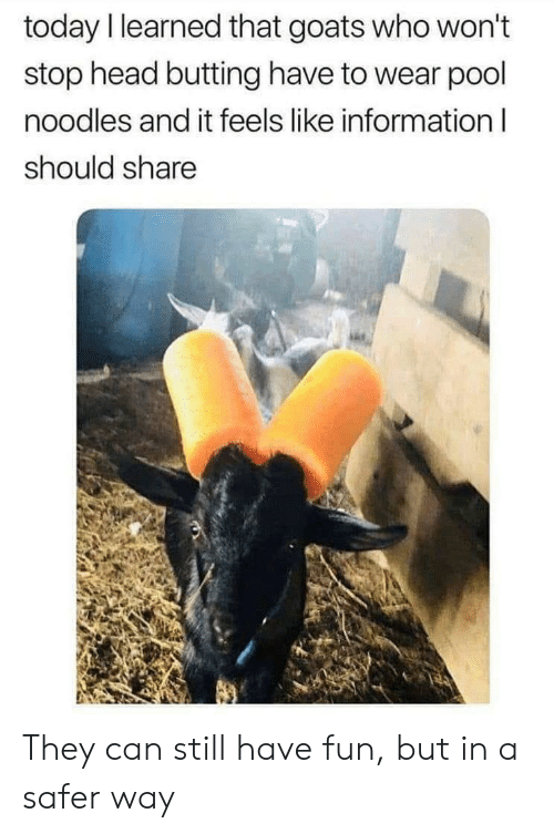 Head, Information, and Pool: today l learned that goats who won't  stop head butting have to wear pool  noodles and it feels like information l  should share They can still have fun, but in a safer way
