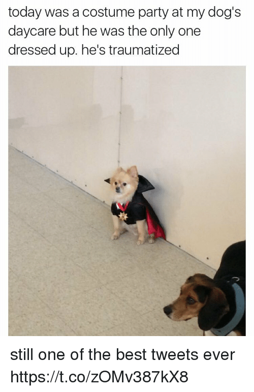 Dogs, Party, and Best: today was a costume party at my dog's  daycare but he was the only one  dressed up. he's traumatized still one of the best tweets ever https://t.co/zOMv387kX8