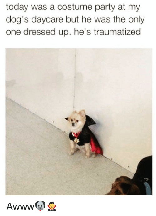 Dogs, Funny, and Party: today was a costume party at my  dog's daycare but he was the only  one dressed up. he's traumatized Awww🐶🧛♂️