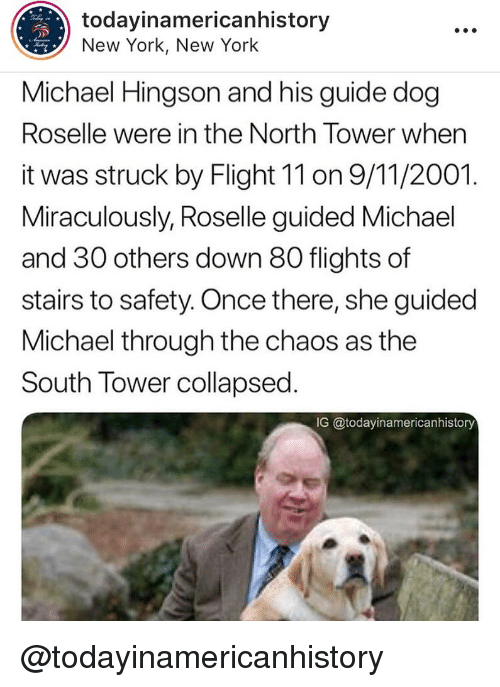 in-the-north: todayinamericanhistory  New York, New York  Michael Hingson and his guide dog  Roselle were in the North Tower when  it was struck by Flight 11 on 9/11/2001.  Miraculously, Roselle guided Michael  and 30 others down 80 flights of  stairs to safety. Once there, she guided  Michael through the chaos as the  South Tower collapsed  IG @todayinamericanhistory @todayinamericanhistory