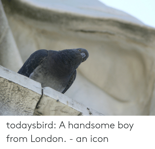 Handsome Boy: todaysbird:  A handsome boy from London. - an icon
