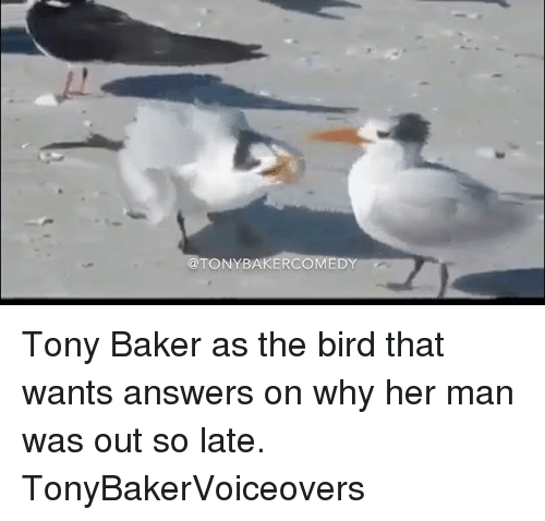 Memes, 🤖, and Answers: TONY BAKER  DY Tony Baker as the bird that wants answers on why her man was out so late. TonyBakerVoiceovers