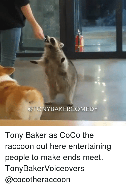 The Raccoons: TONY BAKERCOMEDY Tony Baker as CoCo the raccoon out here entertaining people to make ends meet. TonyBakerVoiceovers @cocotheraccoon