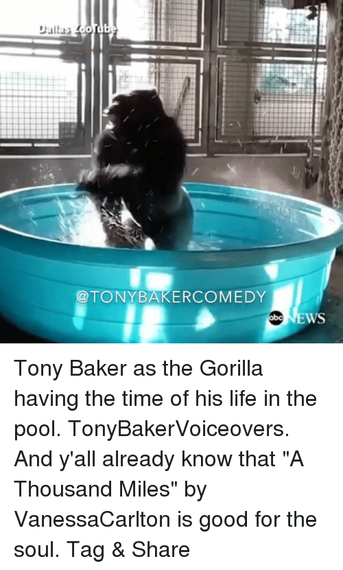 "Life, Memes, and Good: @TONYBAKERCOMEDY Tony Baker as the Gorilla having the time of his life in the pool. TonyBakerVoiceovers. And y'all already know that ""A Thousand Miles"" by VanessaCarlton is good for the soul. Tag & Share"