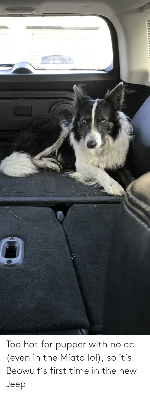 Jeep: Too hot for pupper with no ac (even in the Miata lol), so it's Beowulf's first time in the new Jeep