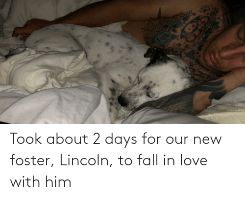 Lincoln: Took about 2 days for our new foster, Lincoln, to fall in love with him