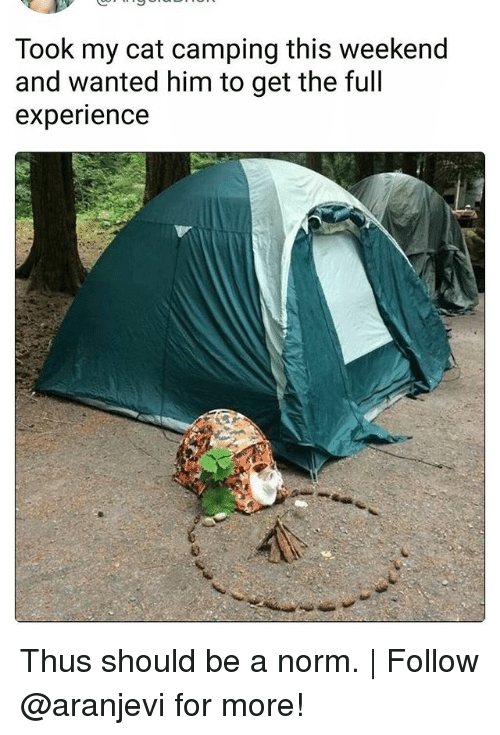 Memes, Experience, and 🤖: Took my cat camping this weekend  and wanted him to get the full  experience Thus should be a norm. | Follow @aranjevi for more!