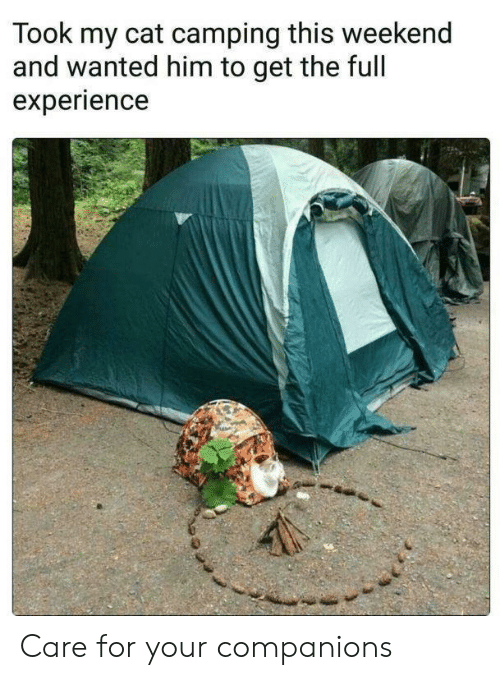 Experience, Cat, and Weekend: Took my cat camping this weekend  and wanted him to get the full  experience Care for your companions