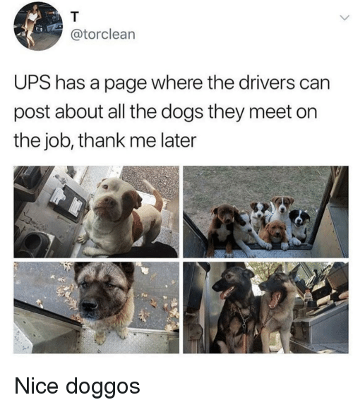 Dogs, Ups, and Nice: @torclean  UPS has a page where the drivers can  post about all the dogs they meet on  the job, thank me later Nice doggos