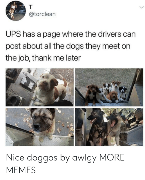 Dank, Dogs, and Memes: @torclean  UPS has a page where the drivers can  post about all the dogs they meet on  the job, thank me later Nice doggos by awlgy MORE MEMES
