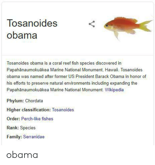 Family, Obama, and Wikipedia: Tosanoides  obama  Tosanoides obama is a coral reef fish species discovered in  Papahänaumokuãkea Marine National Monument, Hawaii. Tosanoides  obama was named after former US President Barack Obama in honor of  his efforts to preserve natural environments including expanding the  Papahanaumokuākea Marine National Monument. Wikipedia  Phylum: Chordata  Higher classification: Tosanoides  Order: Perch-like fishes  Rank: Species  Family: Serranidae obama