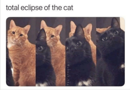 Eclipse, Cat, and Total: total eclipse of the cat