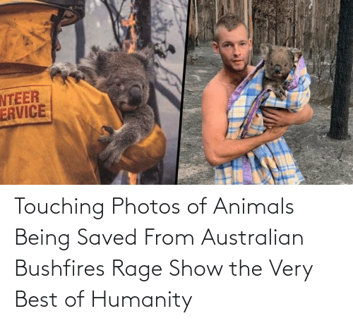 photos: Touching Photos of Animals Being Saved From Australian Bushfires Rage Show the Very Best of Humanity