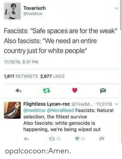 """White Genocide: Tovarisch  @nwbtcw  Fascists: """"Safe spaces are for the weak""""  Also fascists: """"We need an entire  country just for white people""""  11/19/16, 8:31 PM  1,817 RETWEETS 2,677 LIKES  Flightless Lycan-roc @TiredM...-11/21/16 ﹀  @nwbtcw @NoraReed Fascists: Natural  selection, the fittest survive  Also fascists: white genocide is  happening, we're being wiped out opalcocoon:Amen."""