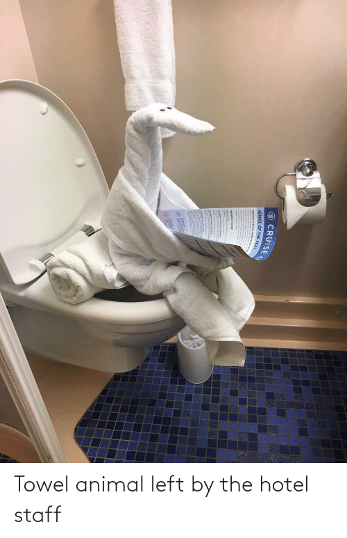 Animal, Hotel, and Staff: Towel animal left by the hotel staff