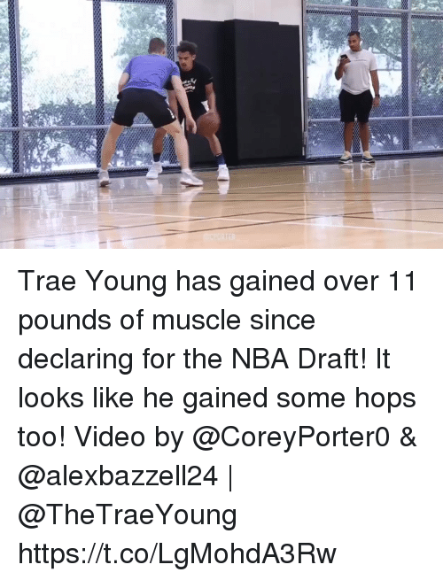 Memes, Nba, and Nba Draft: Trae Young has gained over 11 pounds of muscle since declaring for the NBA Draft! It looks like he gained some hops too!  Video by @CoreyPorter0 & @alexbazzell24   @TheTraeYoung https://t.co/LgMohdA3Rw