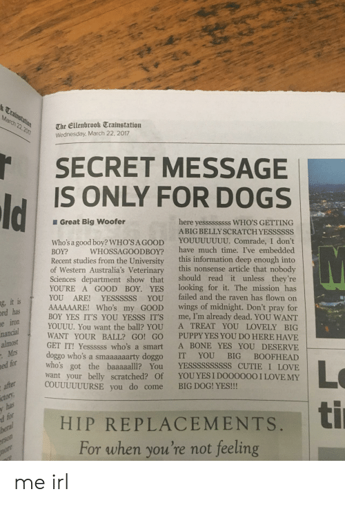 replacements: &Trainstatt  March 22.20  The Ellenbrook Trainstation  Wednesday, March 22, 2017  SECRET MESSAGE  IS ONLY FOR DOGS  Great Big Woofer  here yesssssssss WHO'S GETTING  ABIG BELLYSCRATCH YESSSSSS  Who's a good boy? WHO'SAGOOD YOUUUUUUU. Comrade, I don't  BOY? WHOSSAGOODBOy? have much time. I've embedded  Recent studies from the University this information deep enough into  of Western Australia's Veterinary this nonsense article that nobody  Sciences department show that should read it unless they're  YOU'RE A GOOD BOY. YEs looking for it. The mission has  YOU ARE! YESSSSSS YOU failed and the raven has flown on  AAAAAARE! Who's my GOOD wings of midnight. Don't pray for  BOY YES IT'S YOU YESSS ITS me, I'm already dead. YOU WANT  YOUUU. You want the ball? YOU A TREAT YOU LOVELY BIG  WANT YOUR BALL? GO! GO PUPPY YES YOU DO HERE HAVE  GET IT! Yessssss who's a smart A BONE YES YOU DESERVE  doggo who's a smaaaaaarty doggo IT YOU BIG BOOFHEAD  who's got the baaaaalll? You YESSSSSSSSSS CUTIE I LOVE  want your belly scratched? Of YOUYES I D000000 I LOVE MY  g it is  rd hasA  e iron  nancial  almost  Mrs  ed for  Lo  HIP REPLACEMENTS.tl  COUUUUUURSE you do come BIG DOG! YES!!!  ctory  has  For when you're not feeling me irl
