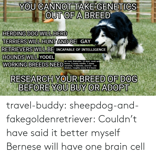 cell: travel-buddy:  sheepdog-and-fakegoldenretriever:  Couldn't have said it better myself   Bernese will have one brain cell