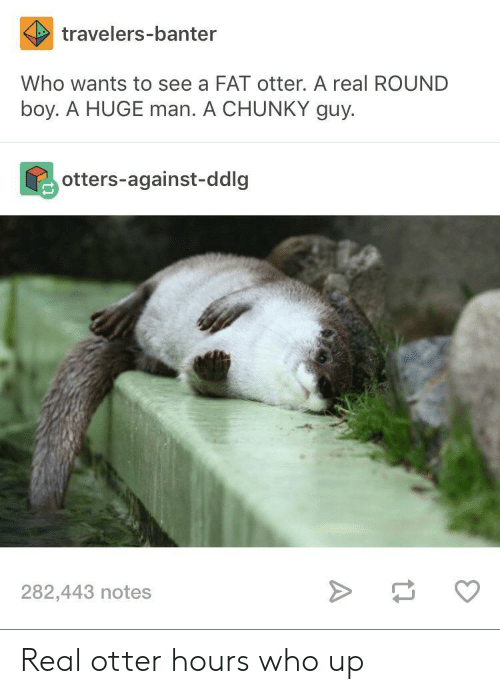 Otters: travelers-banter  Who wants to see a FAT otter. A real ROUND  boy. A HUGE man. A CHUNKY guy.  otters-against-ddlg  282,443 notes Real otter hours who up