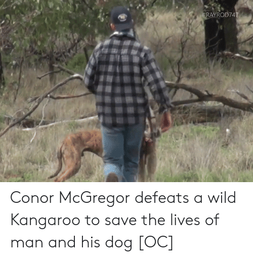 Conor McGregor, Wild, and Dog: tRAYROD747 Conor McGregor defeats a wild Kangaroo to save the lives of man and his dog [OC]