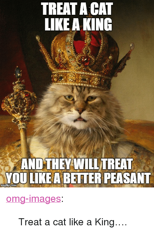 """Omg, Tumblr, and Blog: TREAT A CAT  LIKEA KING  AND THEY WILL TREAT  YOU LIKE A BETTER PEASANT <p><a href=""""https://omg-images.tumblr.com/post/169198021017/treat-a-cat-like-a-king"""" class=""""tumblr_blog"""">omg-images</a>:</p>  <blockquote><p>Treat a cat like a King….</p></blockquote>"""