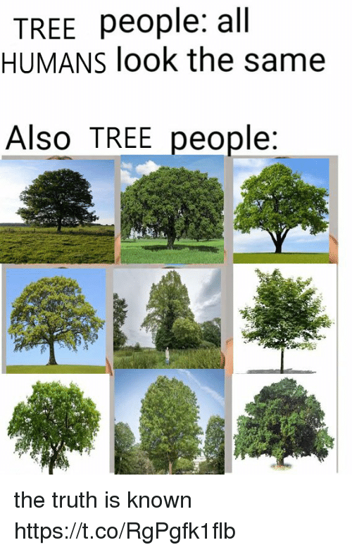 Tree, Truth, and All: TREE people: all  HUMANS look the same  Also TREE people the truth is known https://t.co/RgPgfk1flb