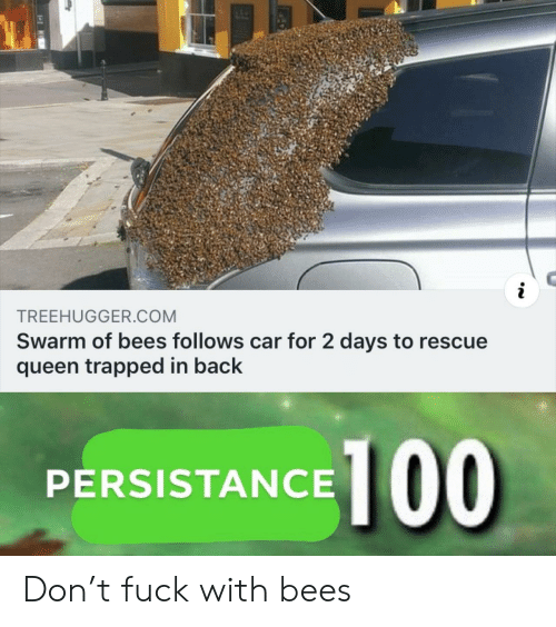 Queen, Fuck, and Back: TREEHUGGER.COM  Swarm of bees follows car for 2 days to rescue  queen trapped in back  PERSISTANCE 100 Don't fuck with bees