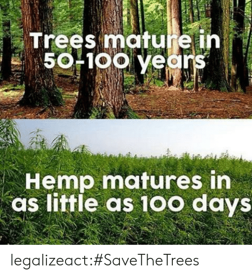 matures: Trees mature ih  50F1oo years  Hemp matures in  as little as 10o days legalizeact:#SaveTheTrees