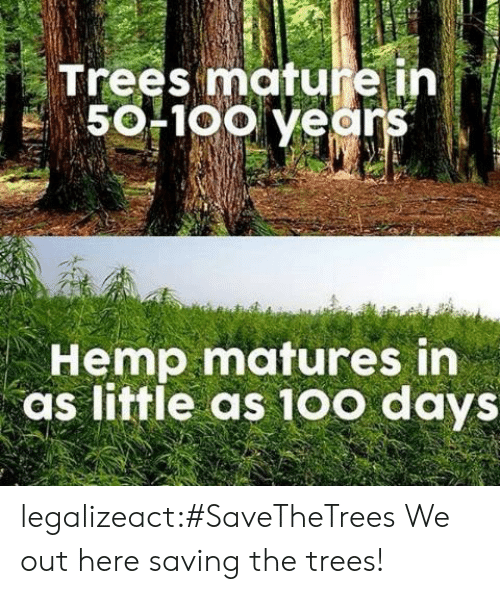 matures: Trees mature ih  50F1oo years  Hemp matures in  as little as 10o days legalizeact:#SaveTheTrees We out here saving the trees!