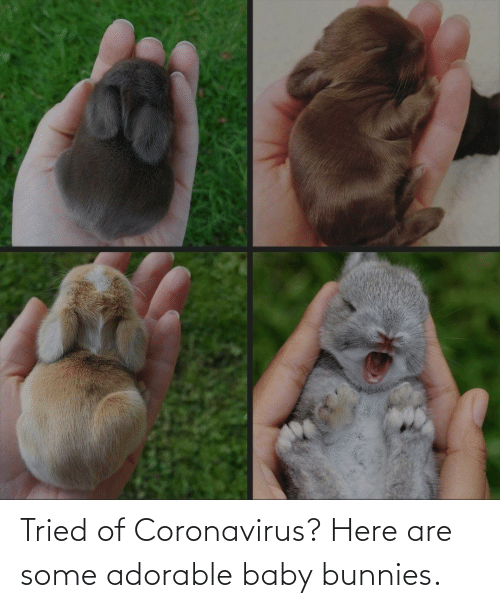 Bunnies: Tried of Coronavirus? Here are some adorable baby bunnies.