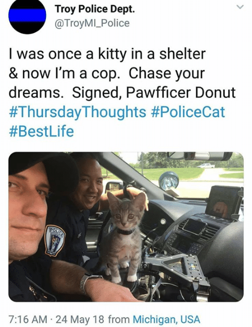 Dept: Troy Police Dept.  @TroyMI_Police  I was once a kitty in a shelter  & now I'm a cop. Chase your  dreams. Signed, Pawfficer Donut  #Thursday-Thoughts #PoliceCat  #BestLife  7:16 AM 24 May 18 from Michigan, USA