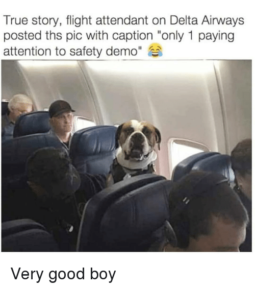 "Memes, True, and Delta: True story, flight attendant on Delta Airways  posted ths pic with caption ""only 1 paying  attention to safety demo"" Very good boy"
