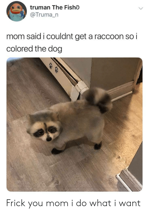 Frick, Raccoon, and Mom: truman The Fisho  @Truma_n  mom said i couldnt get a raccoon so i  colored the dog Frick you mom i do what i want
