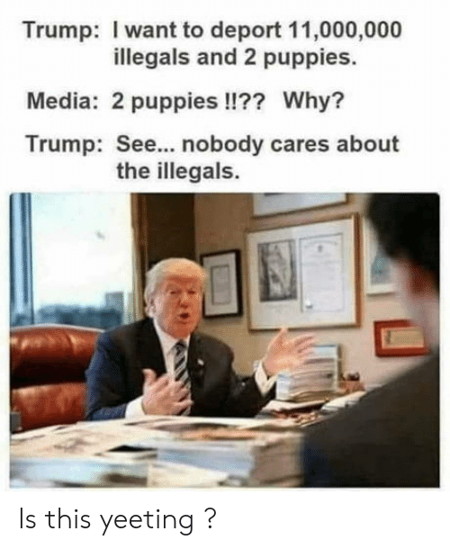 Puppies, Trump, and Media: Trump: I want to deport 11,000,000  illegals and 2 puppies.  Media: 2 puppies !!?? Why?  Trump: See... nobody cares about  the illegals. Is this yeeting ?