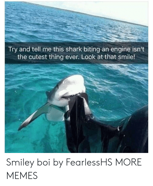 biting: Try and tell me this shark biting an engine isn't  the cutest thing ever. Look at that smile! Smiley boi by FearlessHS MORE MEMES
