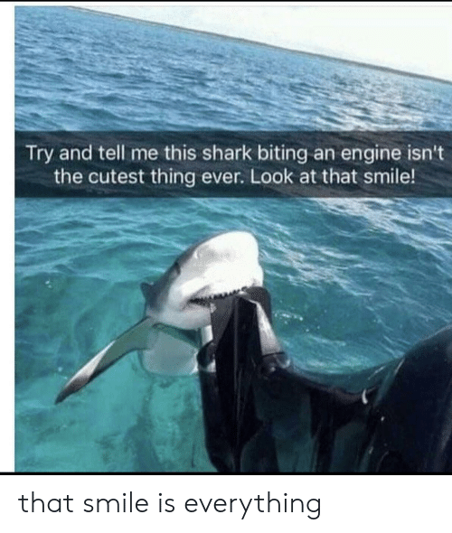 biting: Try and tell me this shark biting an engine isn't  the cutest thing ever. Look at that smile! that smile is everything