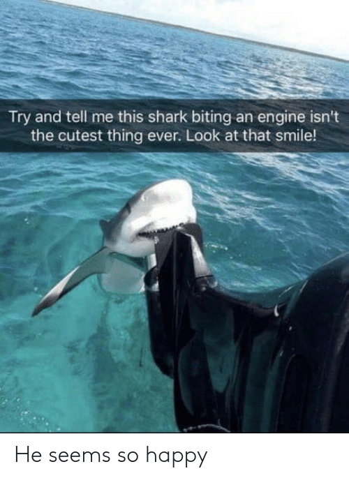 biting: Try and tell me this shark biting an engine isn't  the cutest thing ever. Look at that smile! He seems so happy