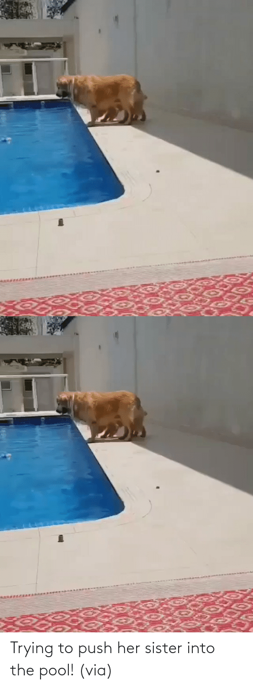push: Trying to push her sister into the pool! (via)