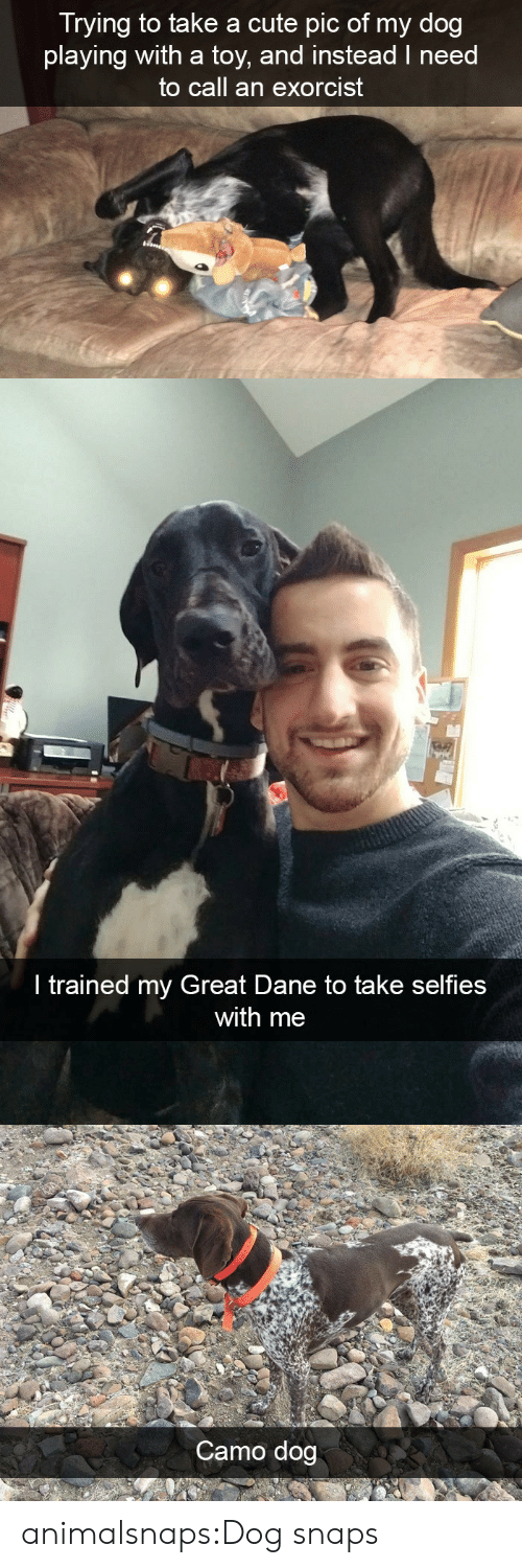 exorcist: Trying to take a cute pic of my dog  playing with a toy, and instead I need  to call an exorcist   ir  I trained my Great Dane to take selfies  with me   Camo dog animalsnaps:Dog snaps