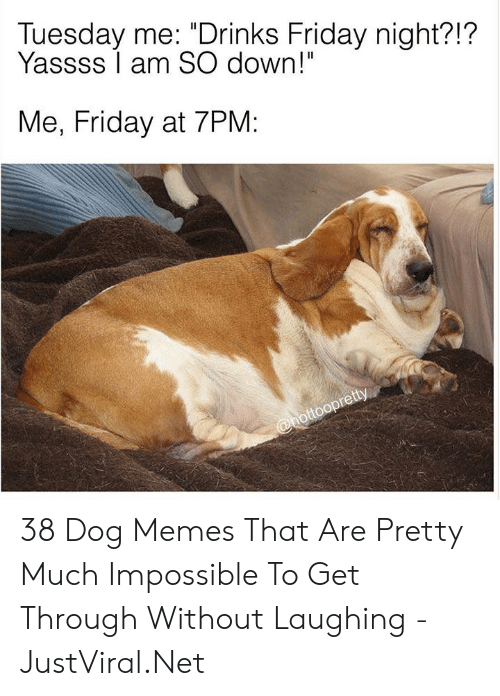 "Am So: Tuesday me: ""Drinks Friday night?!?  Yassss I am SO down!""  Me, Friday at 7PM:  @hottoopretty 38 Dog Memes That Are Pretty Much Impossible To Get Through Without Laughing - JustViral.Net"