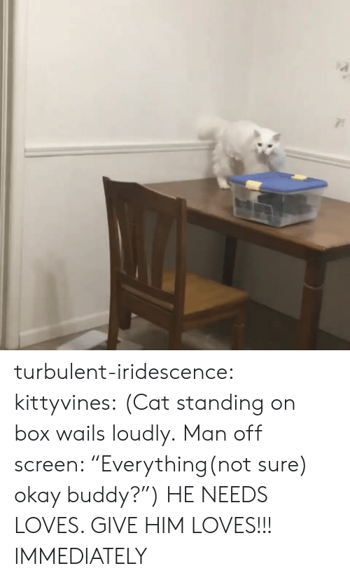 """Turbulent: turbulent-iridescence:  kittyvines:  (Cat standing on box wails loudly. Man off screen: """"Everything(not sure) okay buddy?"""")   HE NEEDS LOVES. GIVE HIM LOVES!!! IMMEDIATELY"""