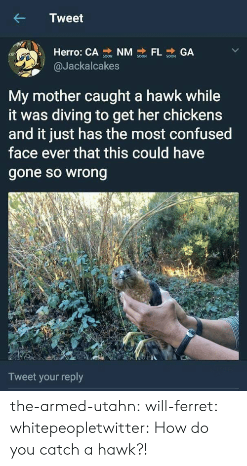 confused face: Tweet  Herro: CA NM GA  KID  @Jackalcakes  My mother caught a hawk while  it was diving to get her chickens  and it just has the most confused  face ever that this could have  gone so wrong  Tweet your reply the-armed-utahn: will-ferret:  whitepeopletwitter: How do you catch a hawk?!