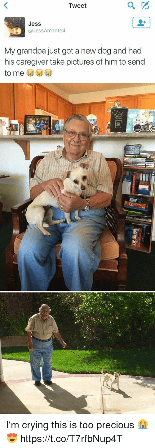 Crying, Dad, and Precious: Tweet  Jess  @Jess Amante4  My grandpa just got a new dog and had  his caregiver take pictures of him to send  to me   DAD I'm crying this is too precious 😭😍 https://t.co/T7rfbNup4T