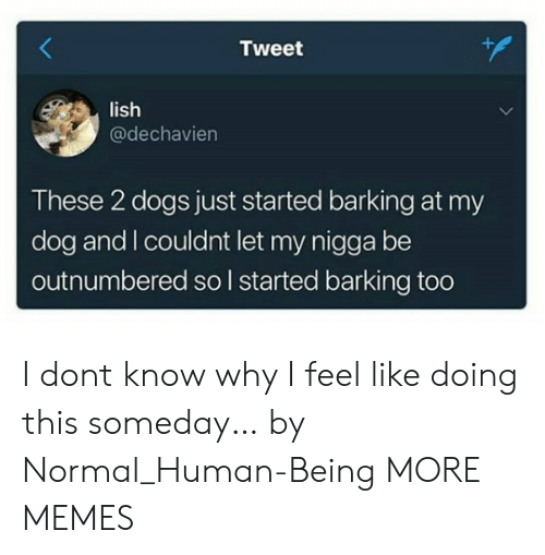 Dank, Dogs, and Memes: Tweet  lish  @dechavien  These 2 dogs just started barking at my  dog and I couldnt let my nigga be  outnumbered so l started barking too I dont know why I feel like doing this someday… by Normal_Human-Being MORE MEMES