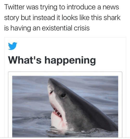 News, Twitter, and Shark: Twitter was trying to introduce a news  story but instead it looks like this shark  is having an existential crisis  What's happening
