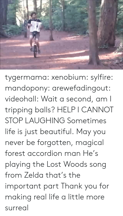 Zelda: tygermama: xenobium:  sylfire:  mandopony:  arewefadingout:  videohall:  Wait a second, am I tripping balls?  HELP I CANNOT STOP LAUGHING  Sometimes life is just beautiful.  May you never be forgotten, magical forest accordion man  He's playing the Lost Woods song from Zelda that's the important part   Thank you for making real life a little more surreal