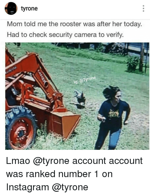 Tyron: tyrone  Mom told me the rooster was after her today.  Had to check security camera to verify  Tyrone  lg: Lmao @tyrone account account was ranked number 1 on Instagram @tyrone
